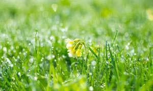 沾满露珠的植物和花朵高清摄影图片
