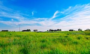 藍天白云下的綠色草地攝影圖片