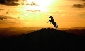 夕阳下奔腾的骏马剪影高清摄影图片