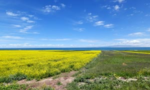 湖邊美麗的油菜花地高清攝影圖片