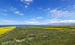 藍天下的湖泊和油菜花攝影圖片