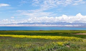 高原湖邊美麗的油菜花地攝影圖片