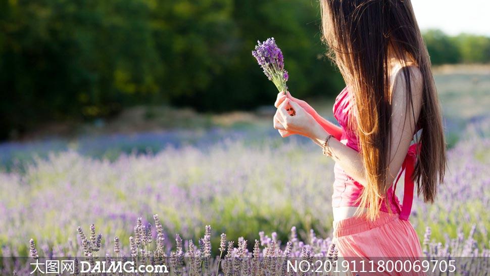 薰衣草花園中的美女高清攝影圖片