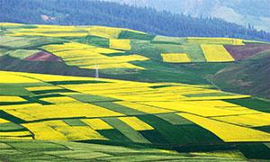 山坡上的農田和農作物攝影圖片