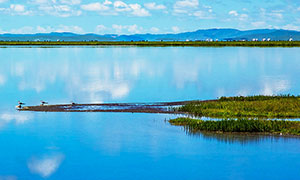 河邊水草邊棲息的小鳥攝影圖片
