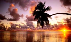 夕阳下的海边椰树美景高清摄影图片