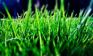 绿色草丛特写高清摄影图片