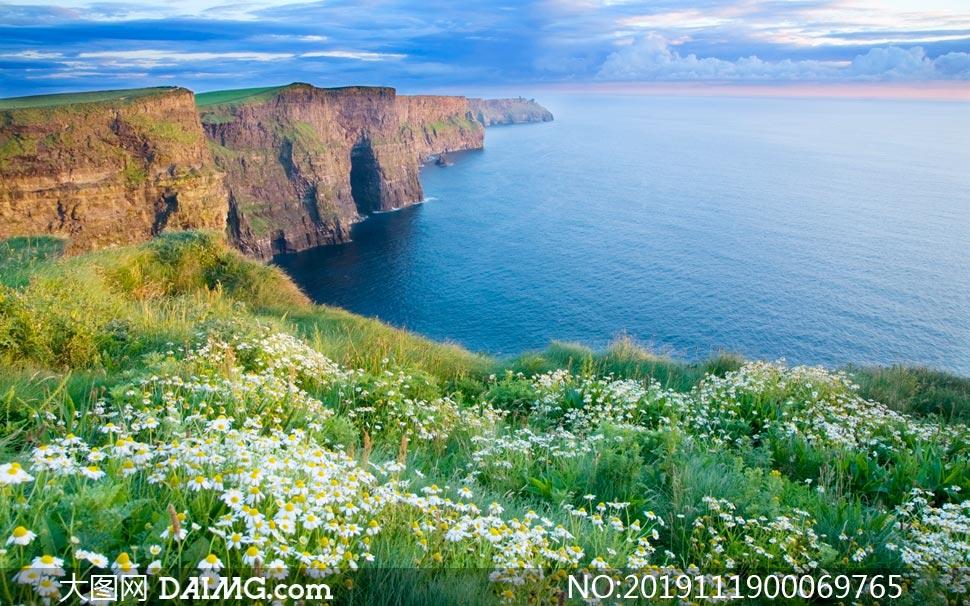 海边的雏菊花海摄影图片