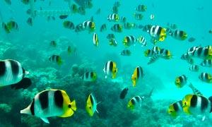 海底世界中的海鱼高清摄影图片