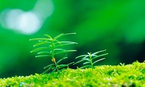新生的枝芽高清摄影图片