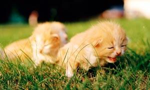 草地上可爱的小猫仔高清摄影图片