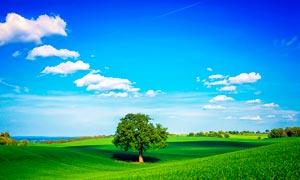 蓝天白云下的农田和大树高清摄影图片