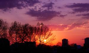 落日下的城市和樹木剪影攝影圖片