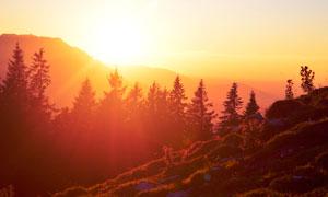 清晨陽光下的山坡和樹林攝影圖片