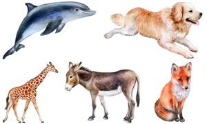 水彩绘画风格动物主题矢量素材集V06