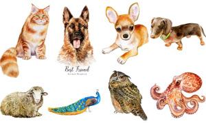 水彩绘画风格动物主题矢量素材集V17