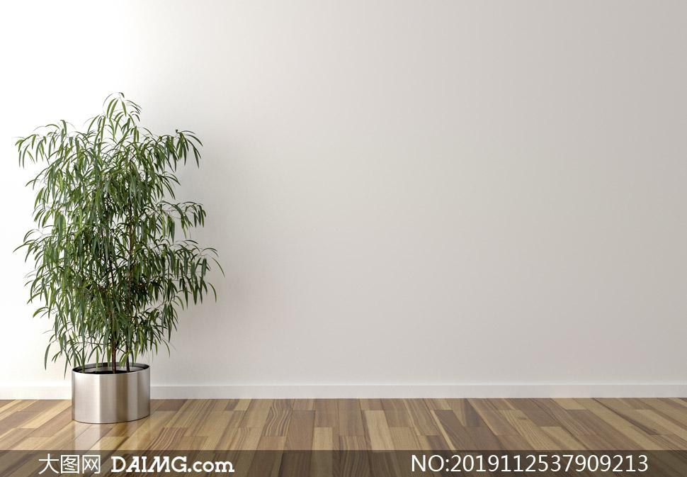 房间地板上的绿叶植物摄影高清图片