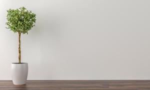 靠着墙摆放的绿叶植物摄影高清图片