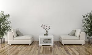 在茶几两侧的沙发绿植摄影高清图片
