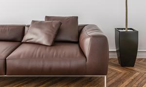 绿叶植物与棕色的真皮沙发高清图片