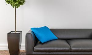 绿植与在沙发上的蓝色抱枕高清图片