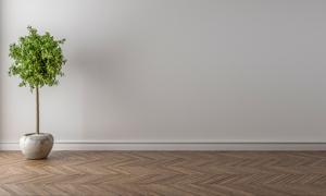 室内一株绿叶植物盆栽渲染高清图片