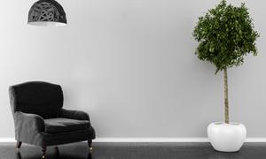 吊燈綠植與黑色的沙發渲染效果圖片