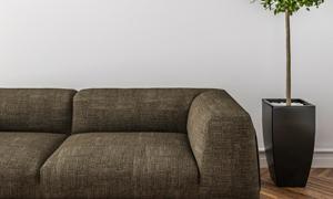 绿叶植物与沙发的一角渲染效果图片
