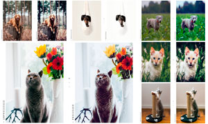 寵物照片后期調色LR預設