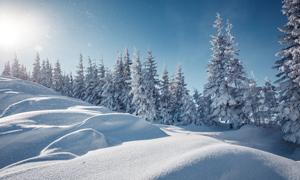 阳光下的山坡树木雪景摄影高清图片