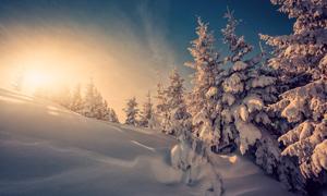 冬日暖阳下的白雪风景摄影高清图片