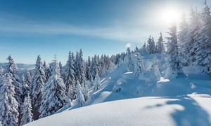 树林与山坡上皑皑白雪摄影高清图片