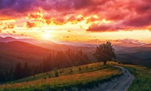 大树小路与连绵起伏的山峦高清图片