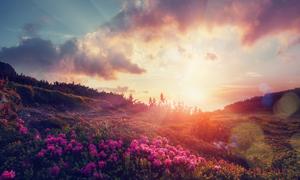 黄昏山上鲜花草丛逆光摄影高清图片