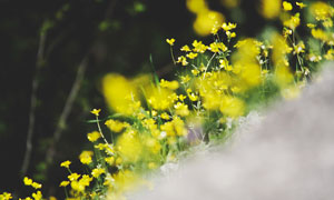 林间美丽的黄色小野花高清摄影图片