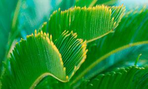 棕榈树叶子近景摄影图片