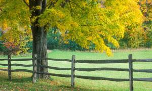 公园大树下的围栏高清摄影图片