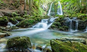 森林中的小溪瀑布美景攝影圖片