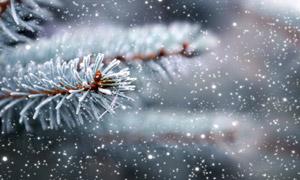 寒冷冬天雪花缀满了的树枝高清图片