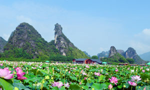 英德峰林美丽的荷花池摄影图片