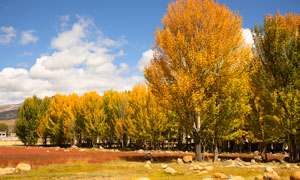 稻城秋季美丽风光高清摄影图片