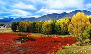 稻城湿地秋季美景高清摄影图片