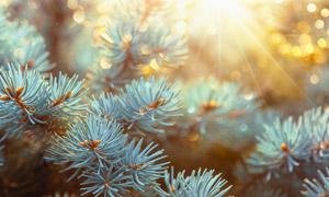 冬天树枝特写逆光全景摄影高清图片