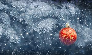 挂在树枝上的圣诞吊球摄影高清图片