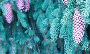 茂密树林中的树枝特写摄影高清图片