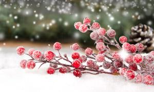 松果與紅色的果子特寫攝影高清圖片