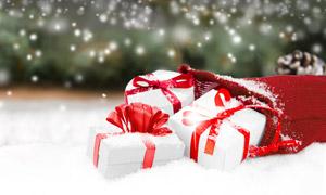 松果與口袋里的禮物盒攝影高清圖片
