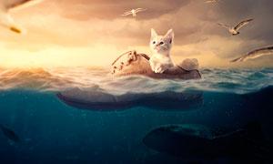 创意的小猫漂流记PS合成教程素材