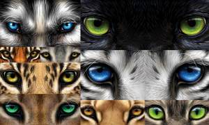 质感效果动物双眸特写主题矢量素材