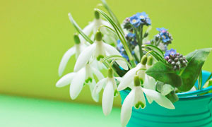 花屏中盛开的兰花高清摄影图片